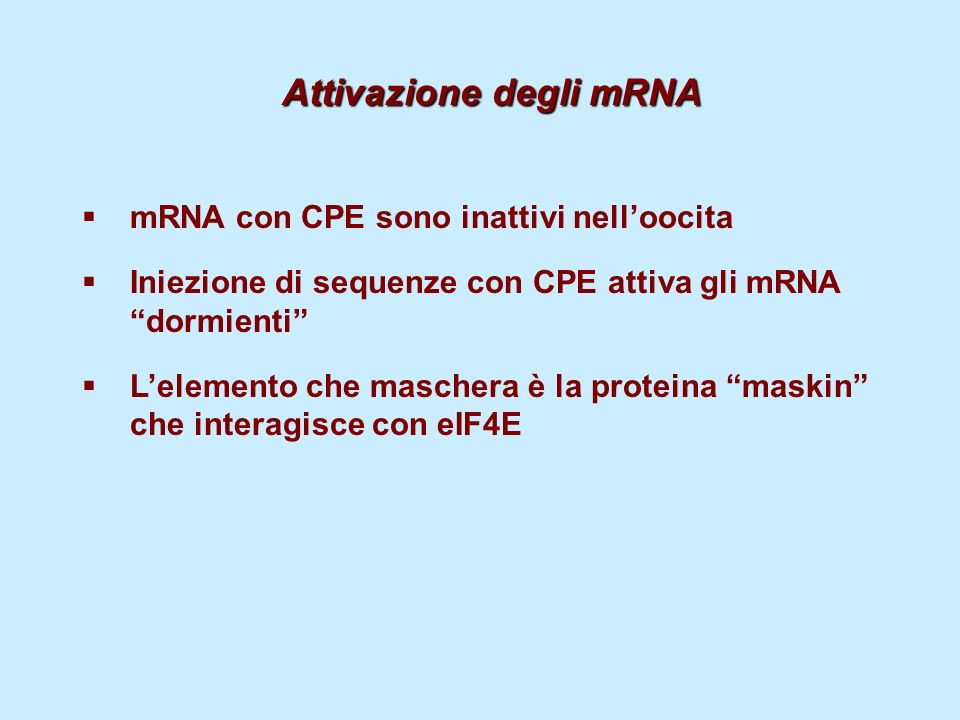 Attivazione degli mRNA