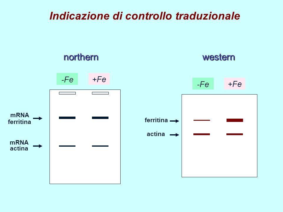 Indicazione di controllo traduzionale