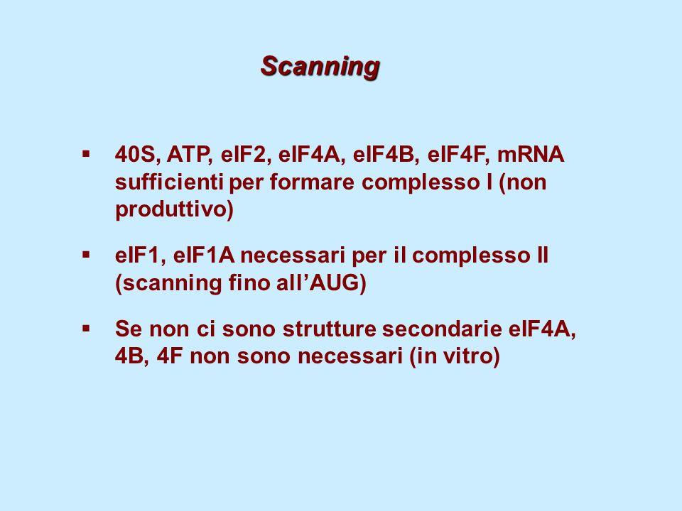 Scanning40S, ATP, eIF2, eIF4A, eIF4B, eIF4F, mRNA sufficienti per formare complesso I (non produttivo)