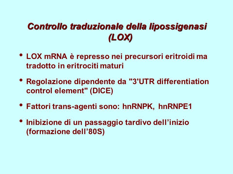 Controllo traduzionale della lipossigenasi (LOX)