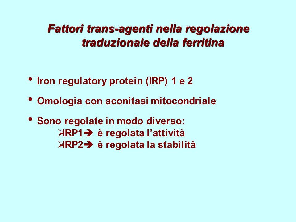 Fattori trans-agenti nella regolazione traduzionale della ferritina