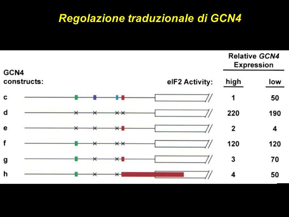 Regolazione traduzionale di GCN4