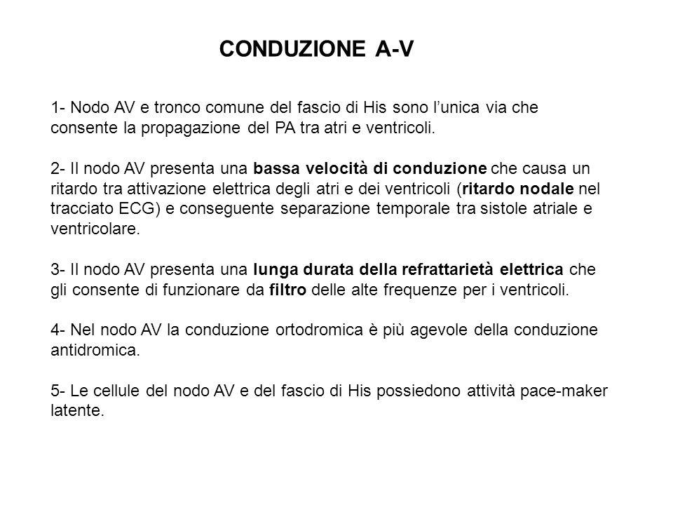CONDUZIONE A-V 1- Nodo AV e tronco comune del fascio di His sono l'unica via che consente la propagazione del PA tra atri e ventricoli.