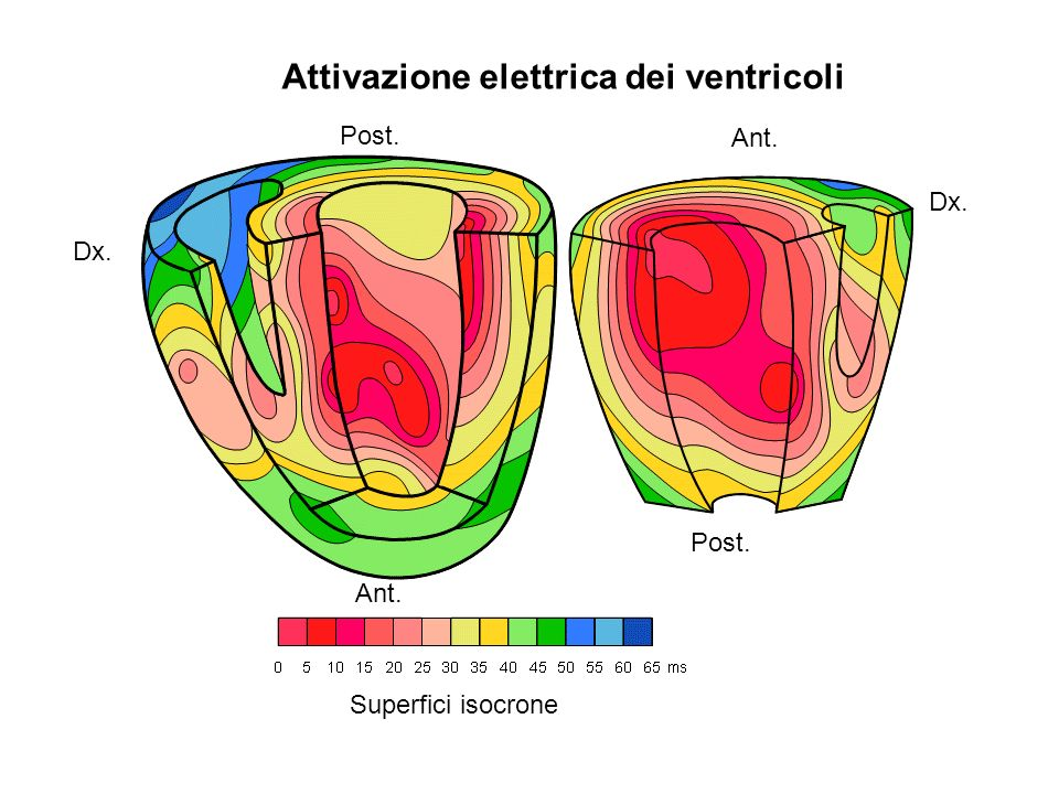 Attivazione elettrica dei ventricoli