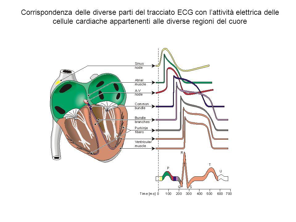 Corrispondenza delle diverse parti del tracciato ECG con l'attività elettrica delle cellule cardiache appartenenti alle diverse regioni del cuore
