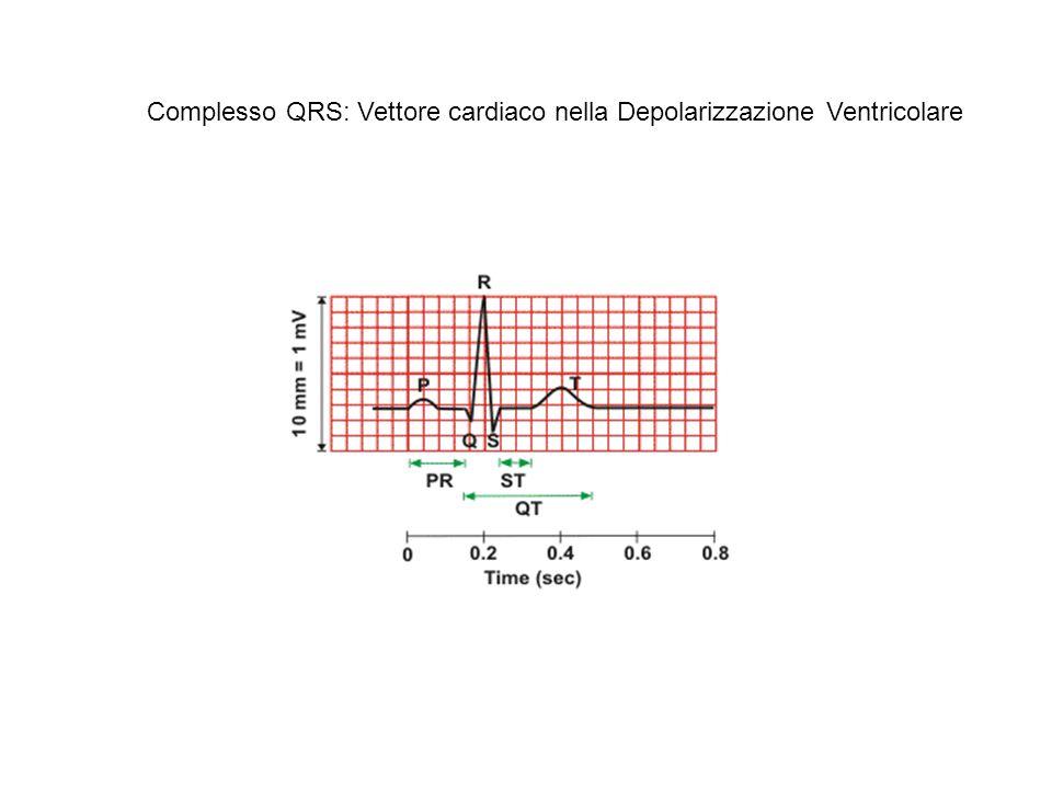 Complesso QRS: Vettore cardiaco nella Depolarizzazione Ventricolare