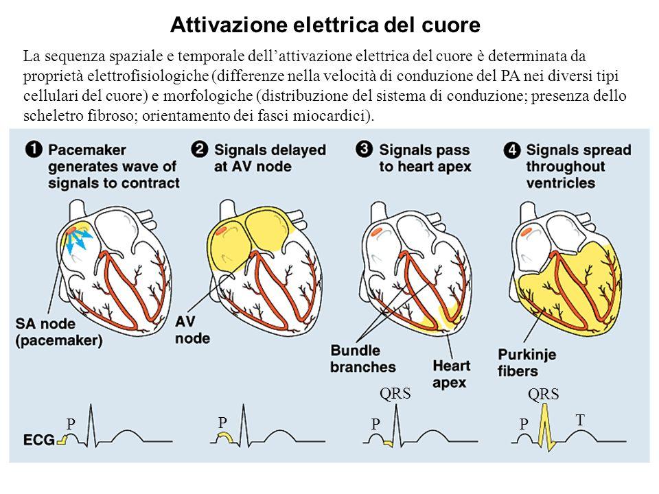 Attivazione elettrica del cuore