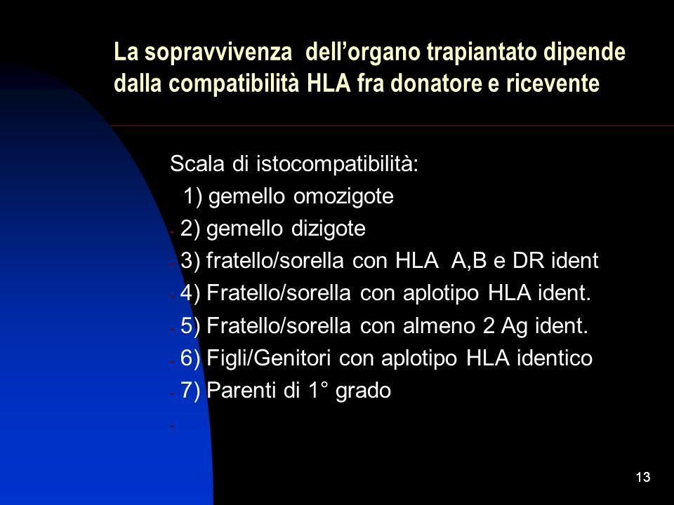 La sopravvivenza dell'organo trapiantato dipende dalla compatibilità HLA fra donatore e ricevente