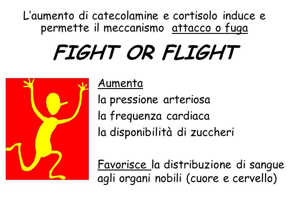 L'aumento di catecolamine e cortisolo induce e permette il meccanismo attacco o fuga FIGHT OR FLIGHT