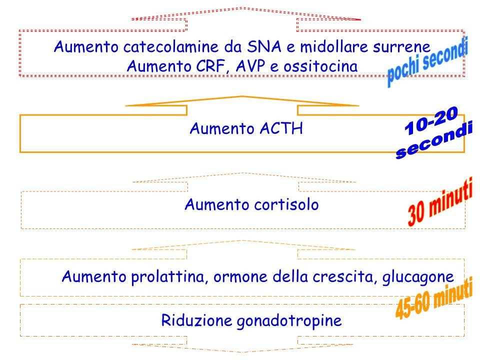 Aumento catecolamine da SNA e midollare surrene