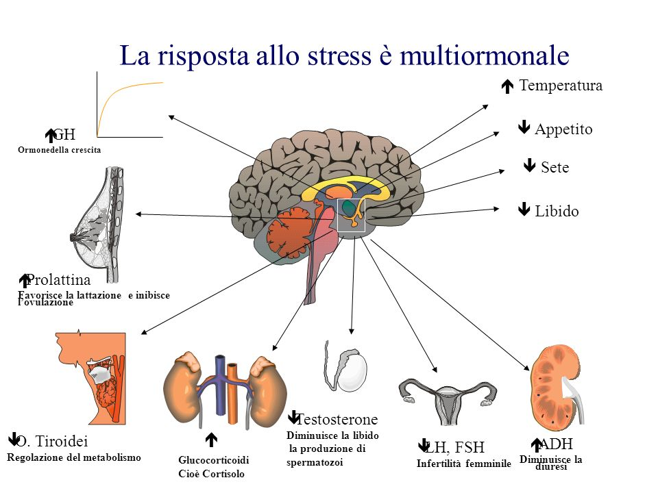 La risposta allo stress è multiormonale