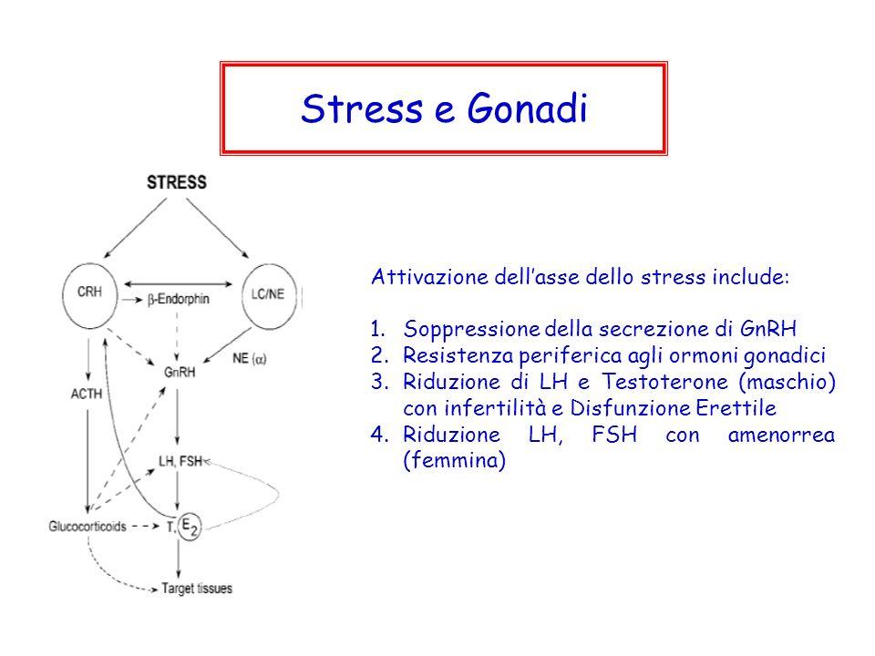 Stress e Gonadi Attivazione dell'asse dello stress include: