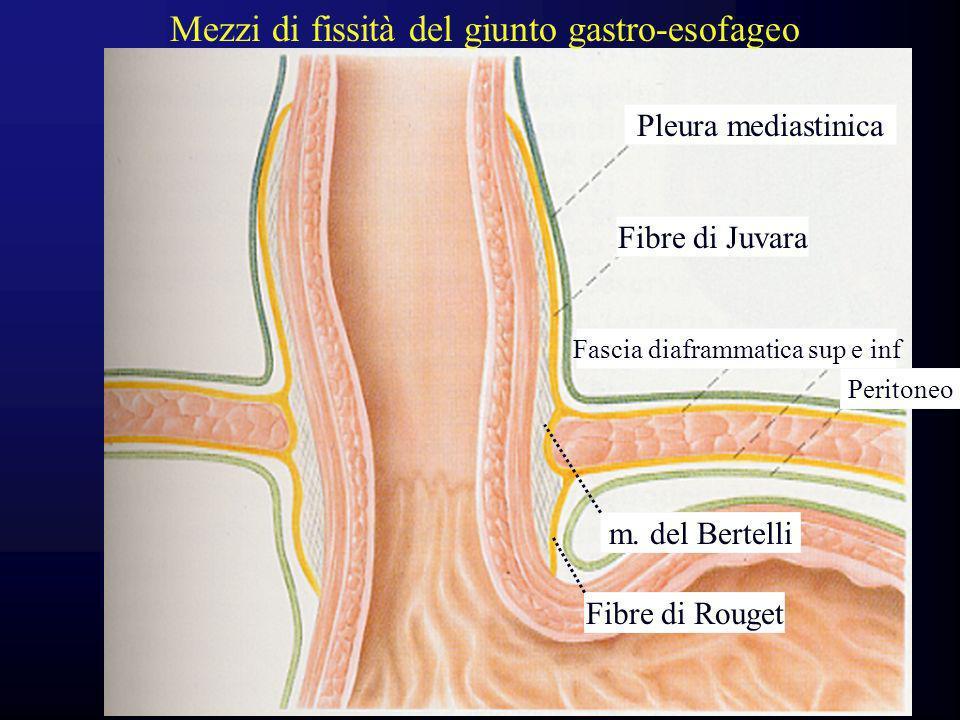 Fascia diaframmatica sup e inf