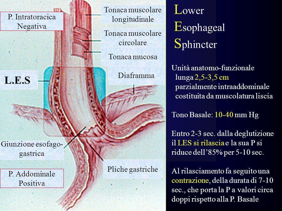 Lower Esophageal Sphincter L.E.S. Tonaca muscolare longitudinale