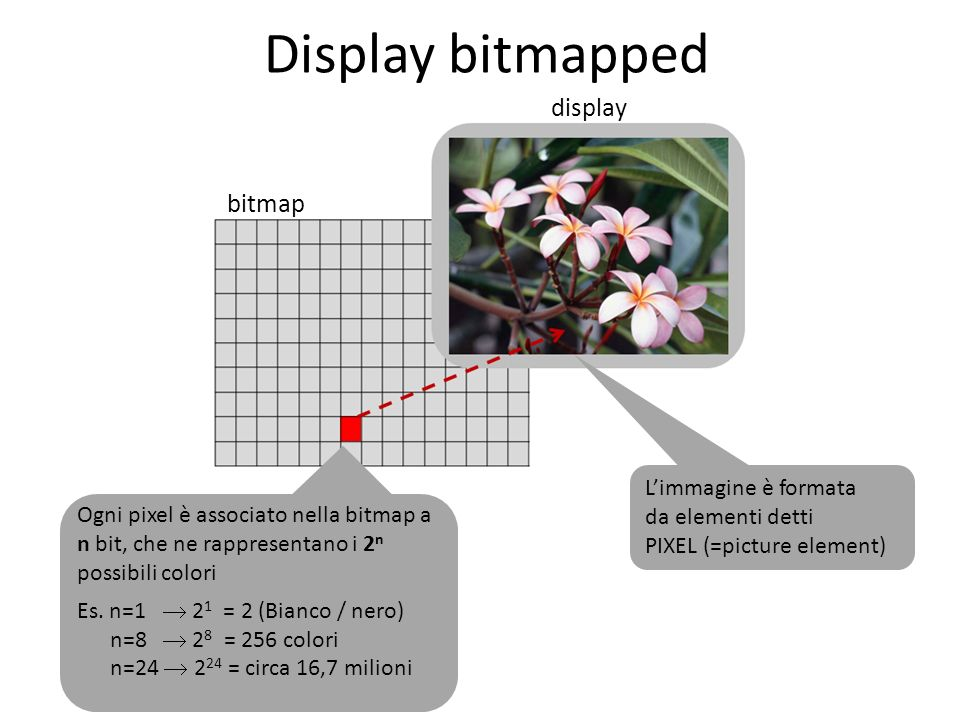Display bitmapped display bitmap