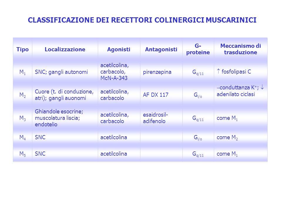 CLASSIFICAZIONE DEI RECETTORI COLINERGICI MUSCARINICI