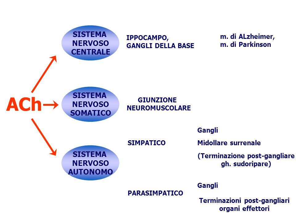 (Terminazione post-gangliare Terminazioni post-gangliari