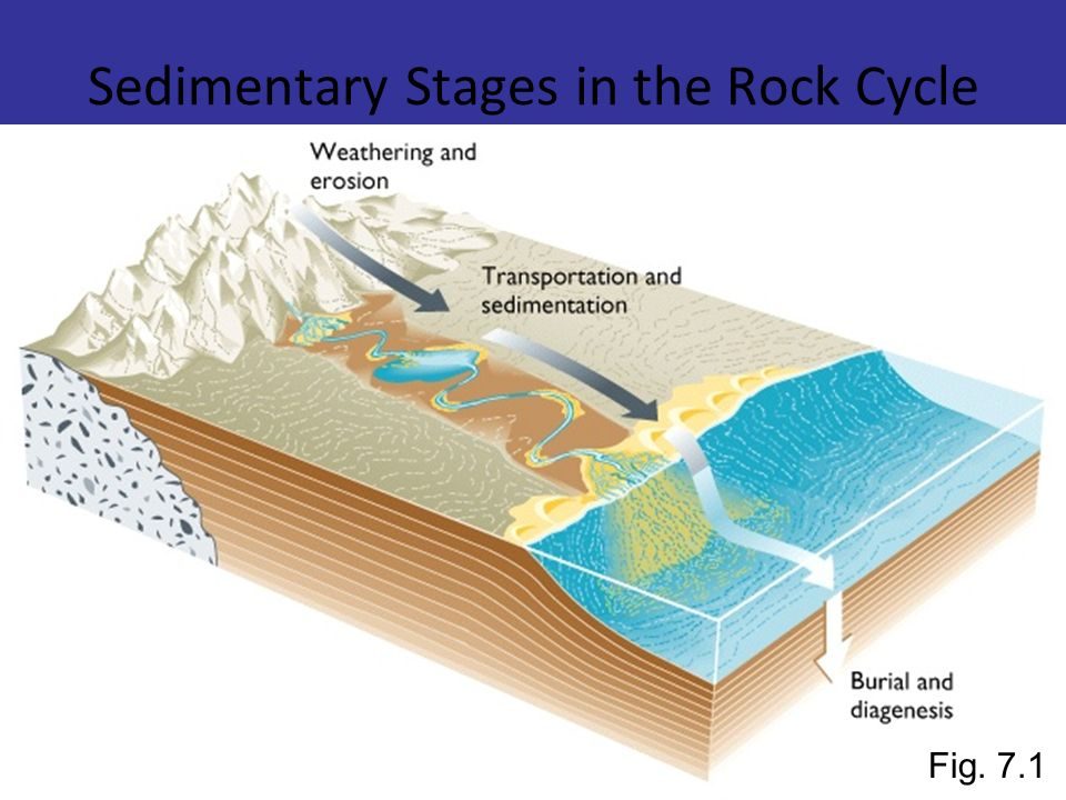 Sedimentary Stages in the Rock Cycle