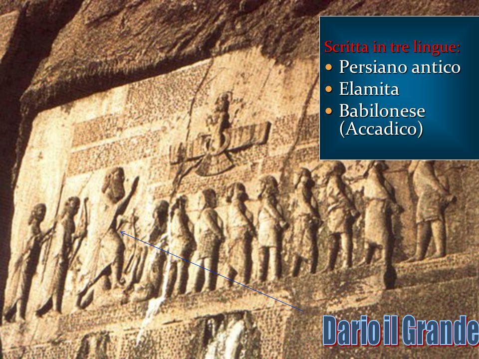 Dario il Grande Persiano antico Elamita Babilonese (Accadico)