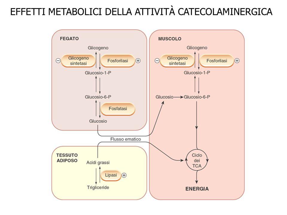 EFFETTI METABOLICI DELLA ATTIVITÀ CATECOLAMINERGICA
