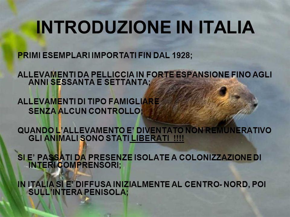 INTRODUZIONE IN ITALIA