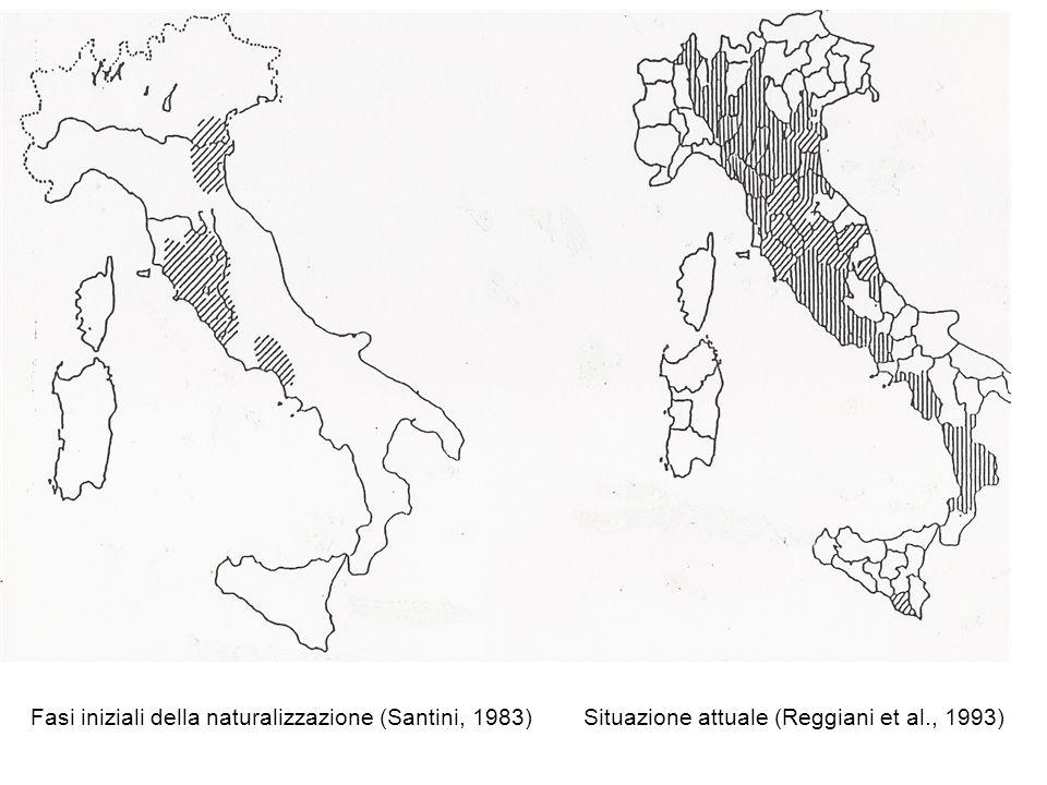 Fasi iniziali della naturalizzazione (Santini, 1983) Situazione attuale (Reggiani et al., 1993)