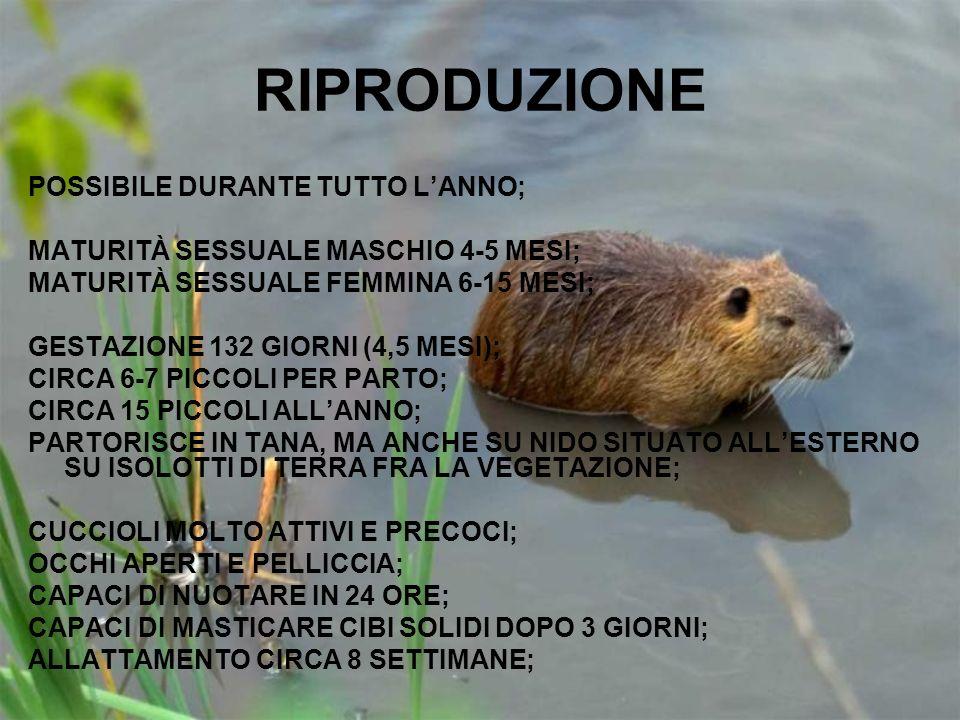 RIPRODUZIONE POSSIBILE DURANTE TUTTO L'ANNO;