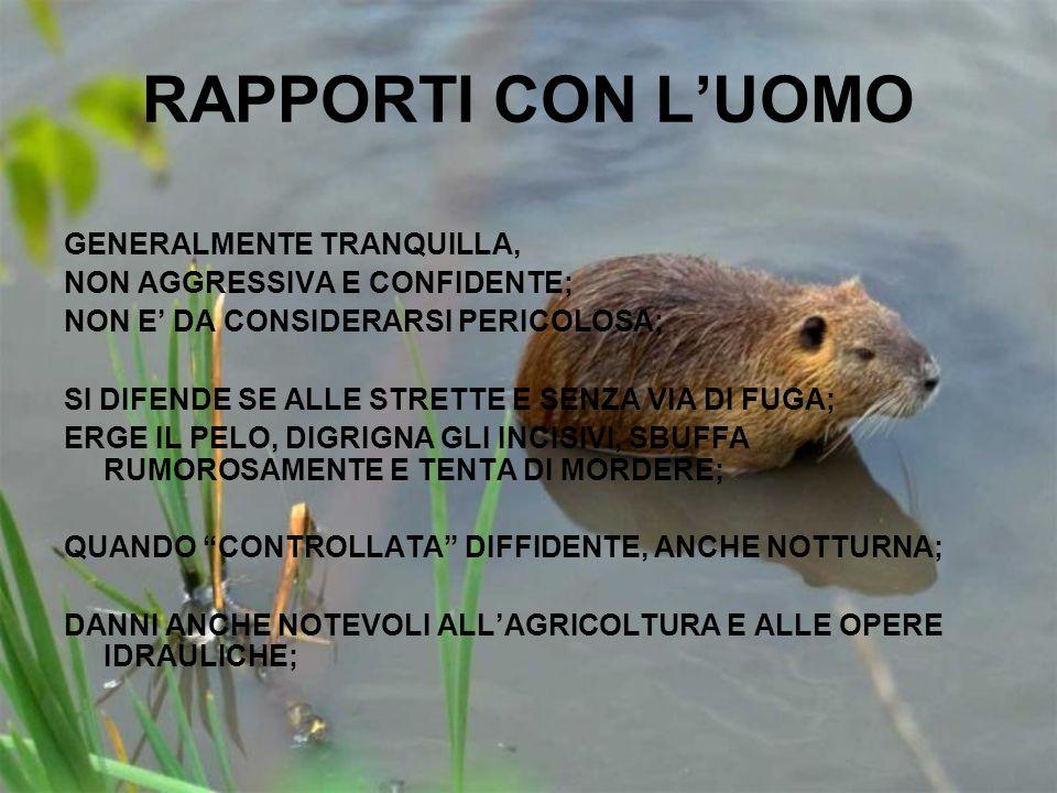 RAPPORTI CON L'UOMO GENERALMENTE TRANQUILLA,