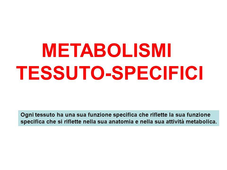 METABOLISMI TESSUTO-SPECIFICI