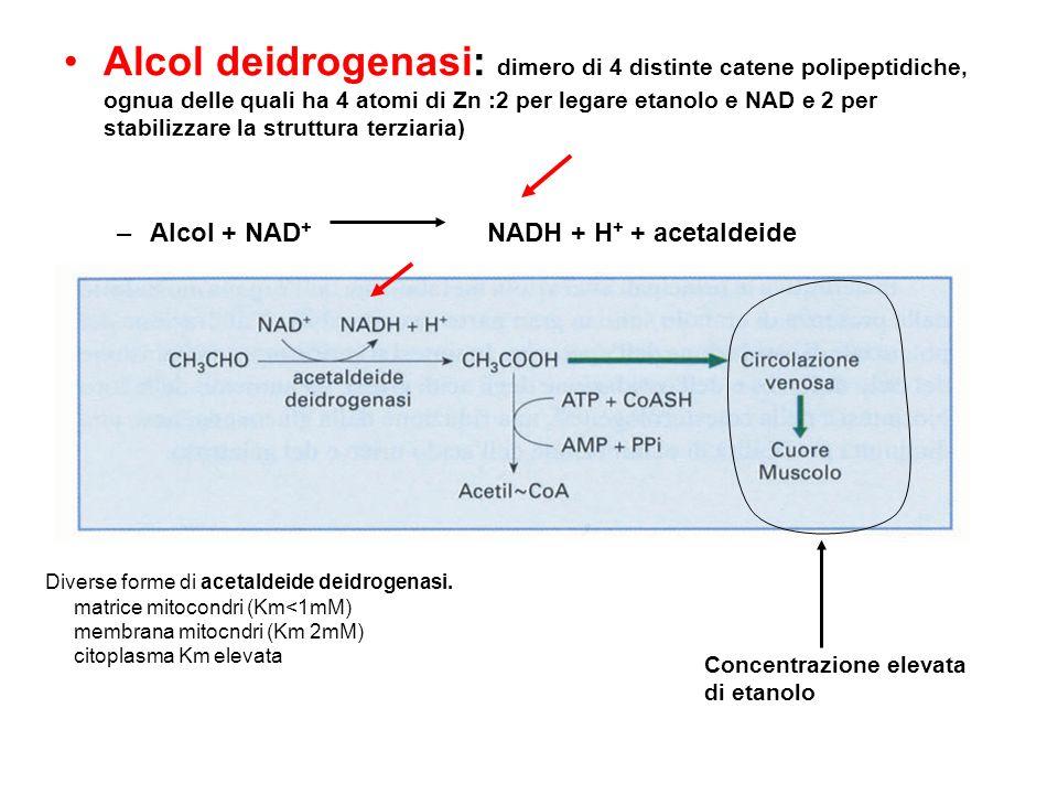 Alcol deidrogenasi: dimero di 4 distinte catene polipeptidiche, ognua delle quali ha 4 atomi di Zn :2 per legare etanolo e NAD e 2 per stabilizzare la struttura terziaria)