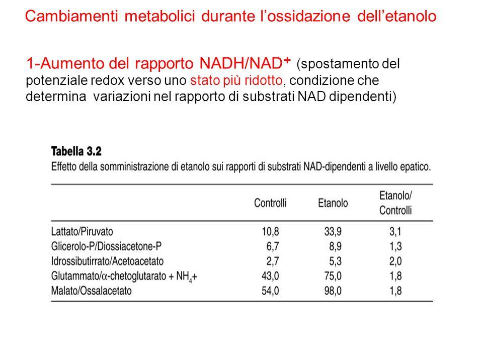 Cambiamenti metabolici durante l'ossidazione dell'etanolo