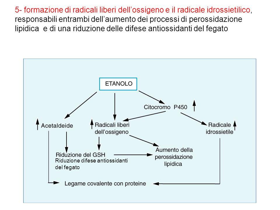 5- formazione di radicali liberi dell'ossigeno e il radicale idrossietilico, responsabili entrambi dell'aumento dei processi di perossidazione lipidica e di una riduzione delle difese antiossidanti del fegato