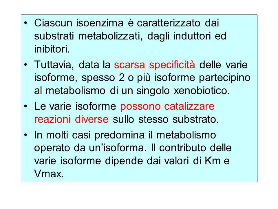 Ciascun isoenzima è caratterizzato dai substrati metabolizzati, dagli induttori ed inibitori.