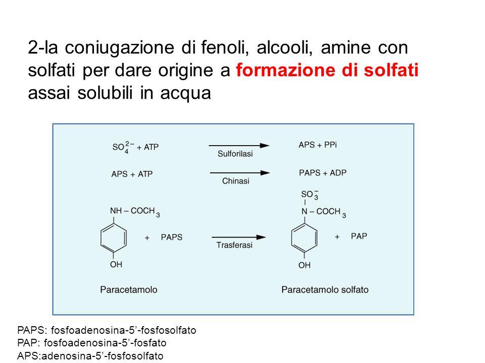 2-la coniugazione di fenoli, alcooli, amine con