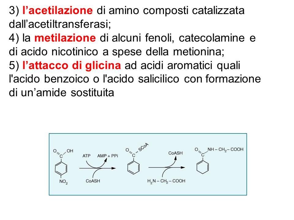 3) l'acetilazione di amino composti catalizzata