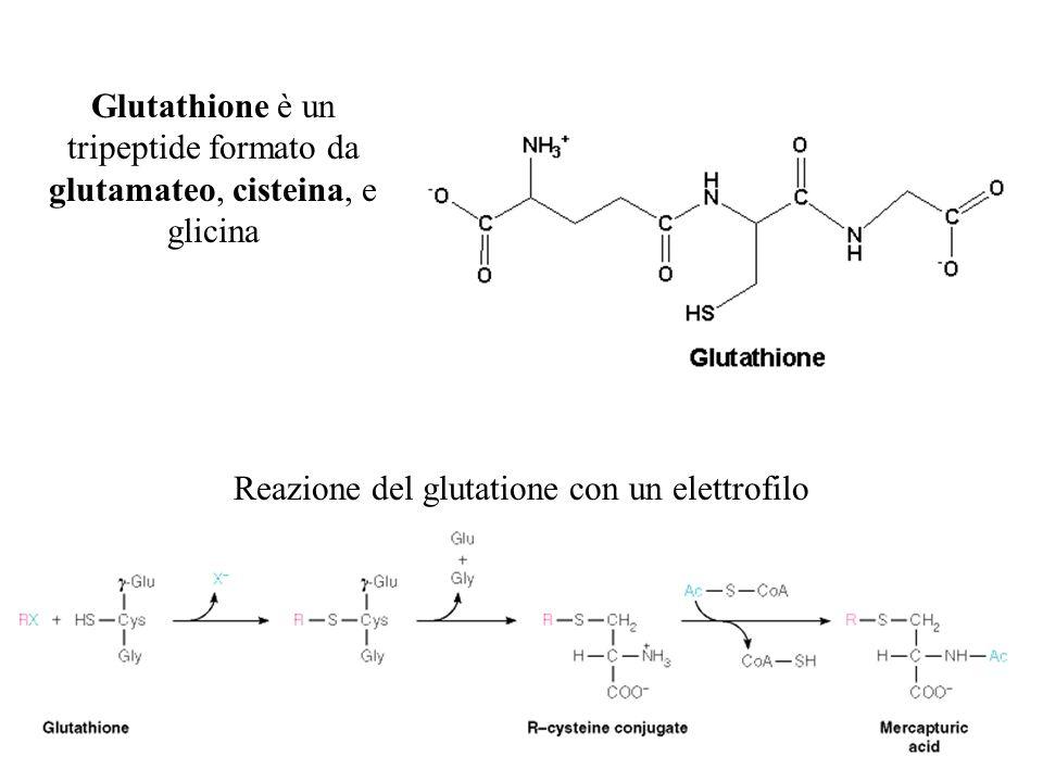 Glutathione è un tripeptide formato da glutamateo, cisteina, e glicina