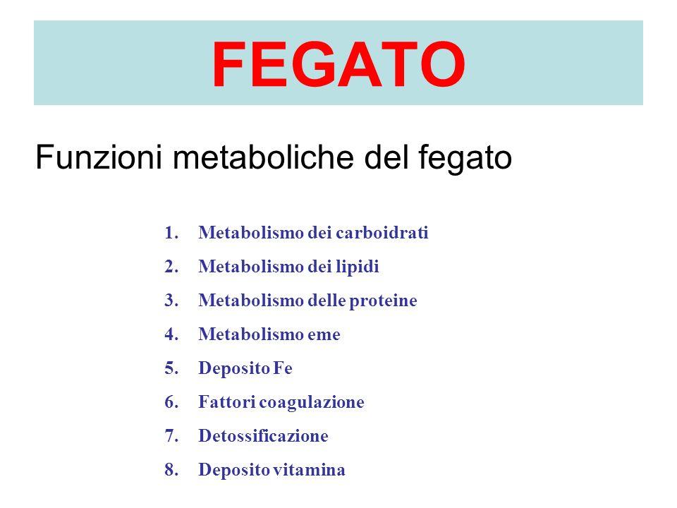 FEGATO Funzioni metaboliche del fegato Metabolismo dei carboidrati