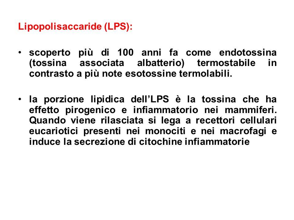 Lipopolisaccaride (LPS):