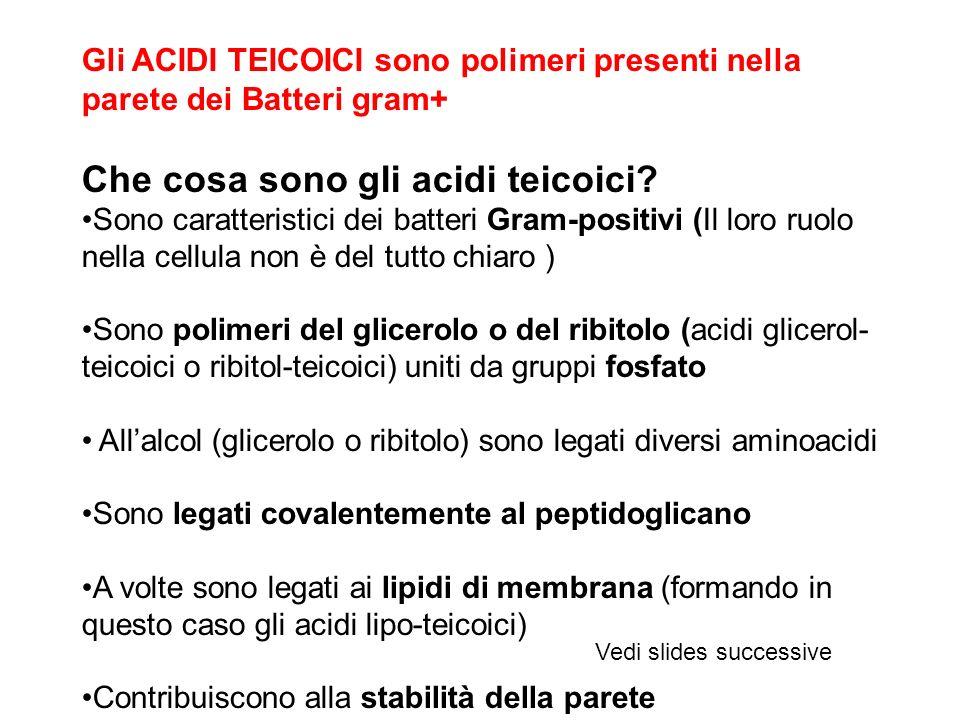 Che cosa sono gli acidi teicoici