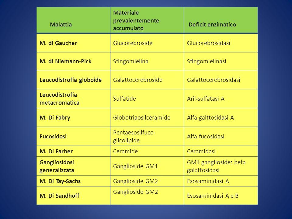 Malattia Materiale prevalentemente accumulato. Deficit enzimatico. M. di Gaucher. Glucorebroside.
