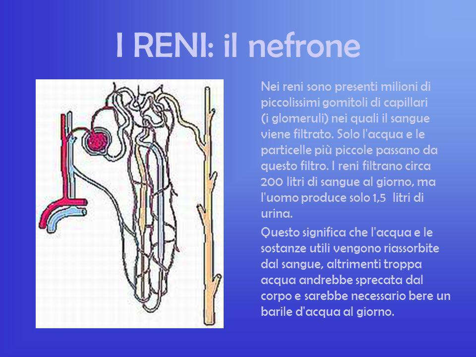 I RENI: il nefrone