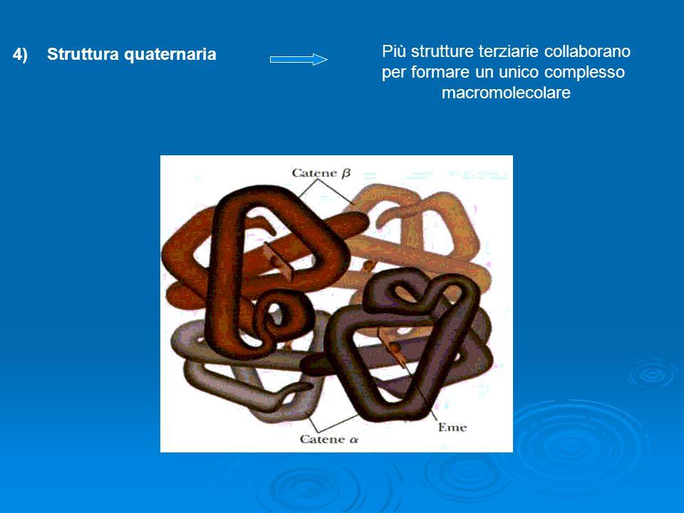 Struttura quaternaria Più strutture terziarie collaborano