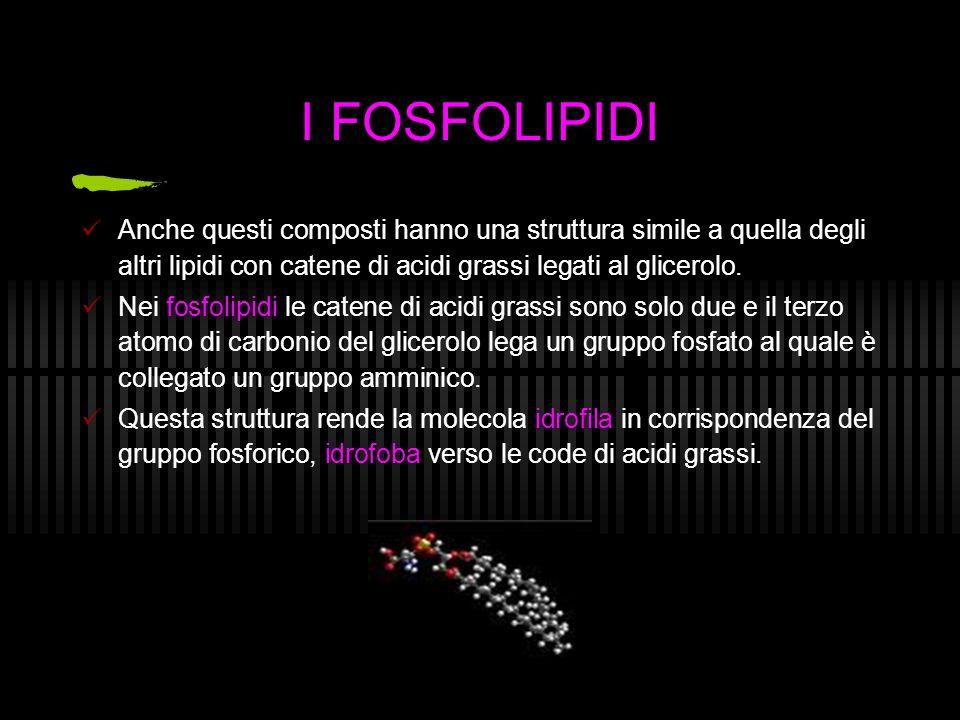 I FOSFOLIPIDI Anche questi composti hanno una struttura simile a quella degli altri lipidi con catene di acidi grassi legati al glicerolo.