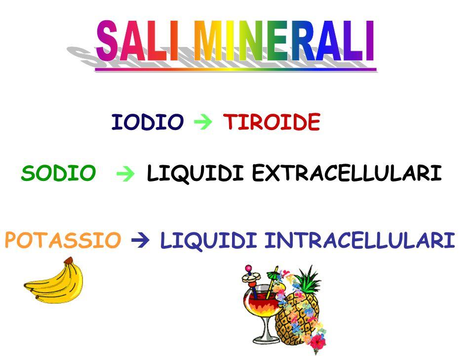 SALI MINERALI IODIO  TIROIDE SODIO  LIQUIDI EXTRACELLULARI