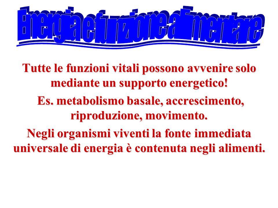 Es. metabolismo basale, accrescimento, riproduzione, movimento.