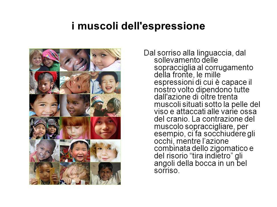 i muscoli dell espressione