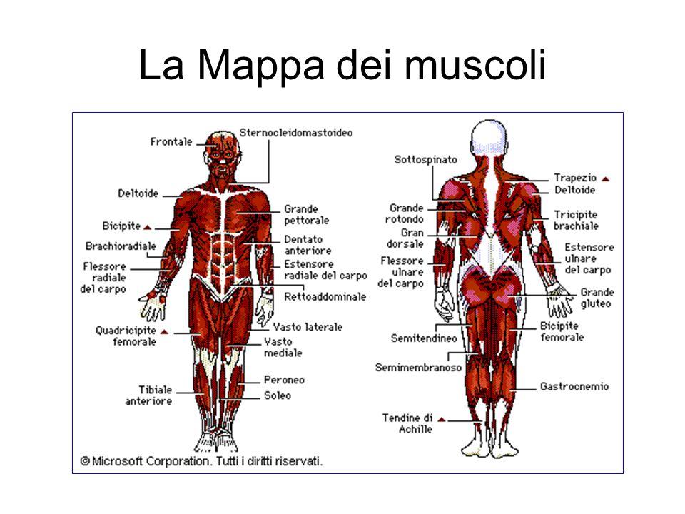 La Mappa dei muscoli