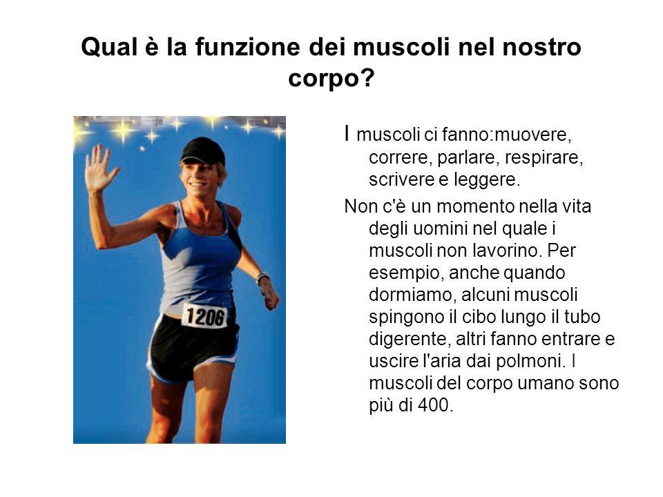 Qual è la funzione dei muscoli nel nostro corpo