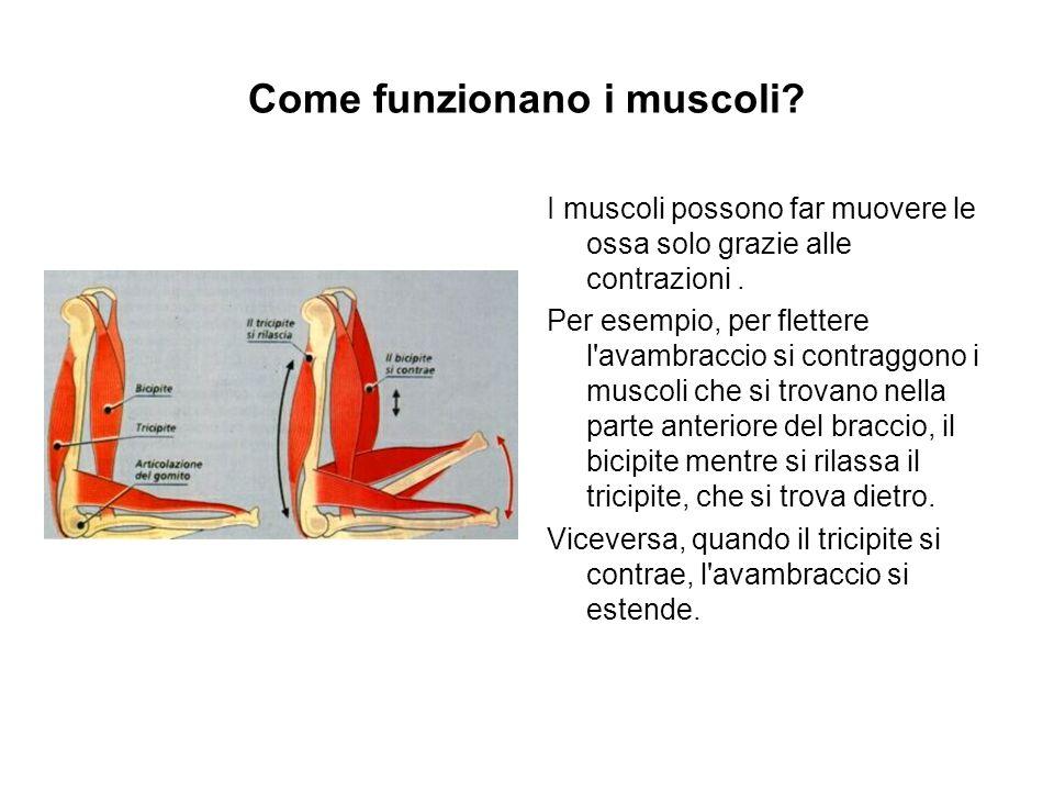 Come funzionano i muscoli
