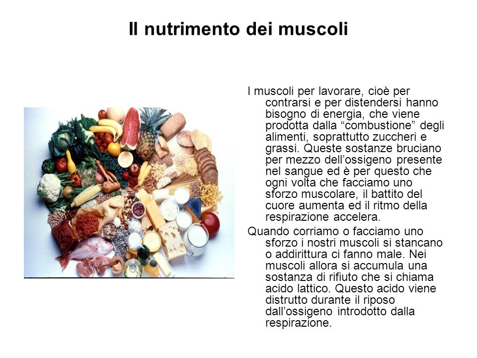 Il nutrimento dei muscoli